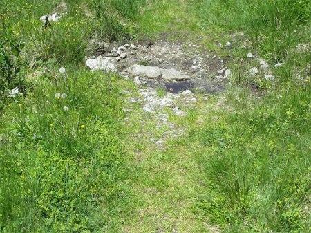 Herbizid bis zum Wassergraben.