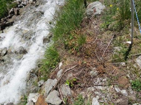 Nur ein bisschen Herbizid am Wasser vor dem Restaurant Alp Garfiun ... macht doch nichts! Es ist aber klar verboten gemäss Chemikalien-Risikoreduktionsverordnung.