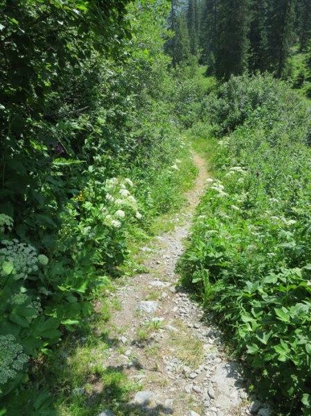 ... dem Herbizid-Trail folgend ...