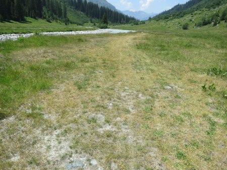 ... abgestorbene Pflanzen auch neben dem breiten Weg ...