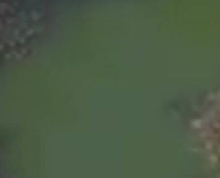 Klicken Sie auf das Bild: Drohnenflug über das Schloss Wyher in Ettiswil. Das Video zeigt das Ausmass der Algenplage im Schlossweiher. Luzerner Zeitung 10.7.17.
