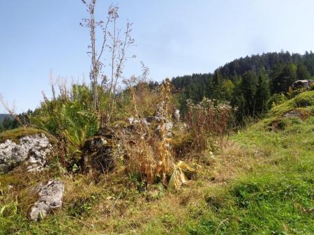 Herbizid auf Pflanzen und Steinen. Copyright: Sophie T.