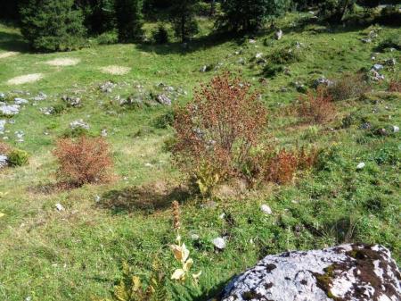 Mit Herbizid behandelte Büsche.