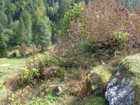 Mit Herbizid behandelte Büsche und Steine.