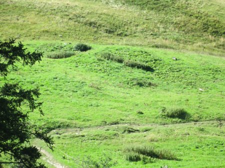 """""""Unsauberes"""" Spritzen ganzer Flächen mit Herbizid, noch gibt es Streifen mit Brennnesseln. Dort wo Brennnesseln waren, wachsen jetzt v.a. Blacken."""
