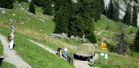Am Bergrestaurant vorbei ... Touristen fotografieren ... unzählige Samenständer von Blacken auf den Weiden ...