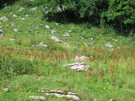 Blacken wachsen auf der kargen steinigen Weide.