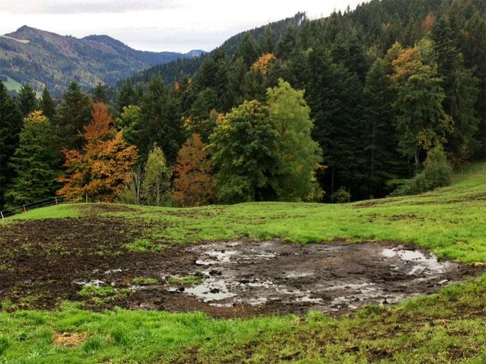 ... Hier lag er, der Mist. Offenbar braucht der Bauer die Nährstoffe nicht, welche in den sechs Monaten ausgewaschen wurden und allenfalls in einer Quelle oder im Grundwasser zum Vorschein kommen ...