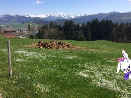 ... Anfang April waren die Bergspitzen noch schneebedeckt und derselbe Misthaufen lag schon mitten auf dem Wanderweg des Osterhasen ...