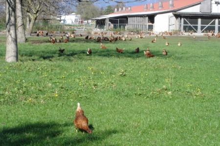 Wir sollten weniger Fleisch, und zwar drastisch viel weniger Fleisch konsumieren. Vor allem von Schweinen und Hühnern, die mit Kraftfutter gefüttert werden und besonders hohe negative Umweltwirkungen haben.