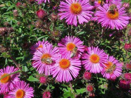 Eine deutsche Studie zeigt: 75 Prozent der Menge aller Insekten sind weg, im Vergleich zu 1970. 48 Prozent der Pflanzen in der Schweiz stehen auf der roten Liste, sind also vom Aussterben bedroht.