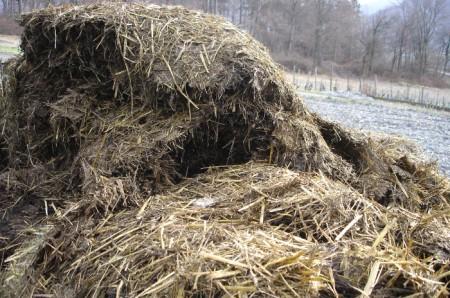 """Heidis """"Miststock-Blick"""" über das Maisfeld hinweg zu den Rebstöcken am Hang."""