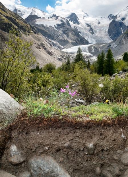 Gebirgsboden beim Morteratschgletscher, Gletschervorfeld, Pontresina, 2005 m ü. M. © Gabriela Brändle, Roman Berger, Michael Wernli