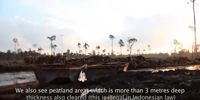 Obwohl es in Indonesien verboten ist, Urwald auf Torfboden (hier 3 m mächtig) zu roden, wir dies beobachtet. Copyright: Greenpeace Indonesia.