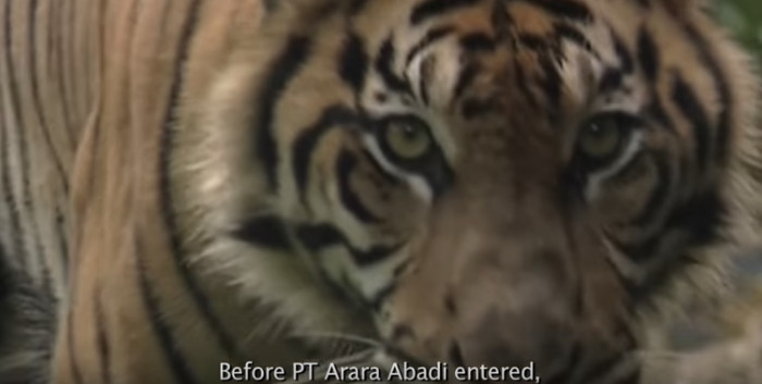 PT Arara Abadi wird durch Sinar Mas Forestry betrieben; diese Firma ist exklusiver Rohstofflieferant der Asia Pulp and Paper Company (APP). Copyright: Greenpeace Indonesia.