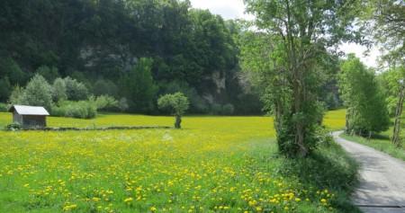 Ein schöner Weg führt ins nächste Dorf. Auch hier dominiert der Löwenzahn.