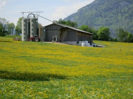 Ein kurzer Weg führt vom gelbumrahmten Bauernhof zum Misthaufen.