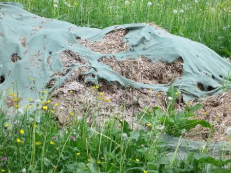 ... seit Monaten zum Teil in der Uferzone der Landquart in Malans ...