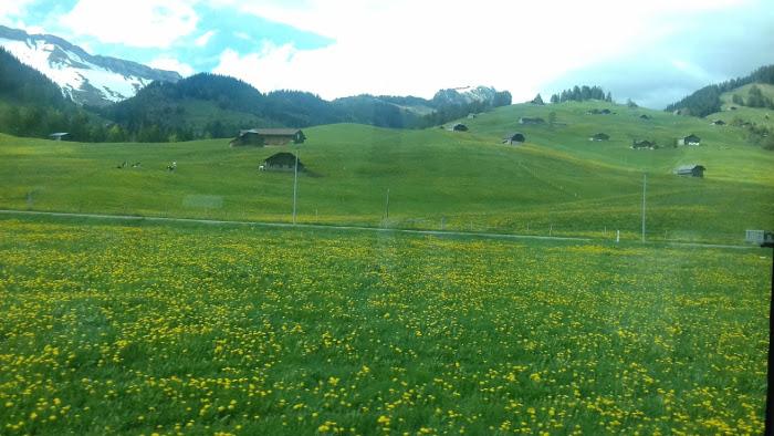 Saublumen'pracht' im schönen Pays d'Enhaut und Oberland.