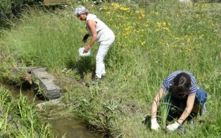 """Am Nebelbach in Zürich wurden einheimische Stauden gepflanzt, um das Blütenangebot für Schmetterlinge, Wildbienen und weitere Insekten zu erhöhen. Für die Pflanzung wurde der Verein """"Natur im Siedlungsgebiet"""" von zwei Freiwilligen unterstützt. Gepflanzt wurden Gilbweiderich, Blutweiderich und Gelbe Schwertlilien. Alle drei Arten blühen sehr schön. Copyright: Natur im Siedlungsraum."""