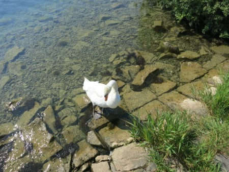 Die Idylle trügt: In vielen Schweizer Seen mangelt es an Sauerstoff. Rund um den Sempachersee z.B. werden mehr Tiere gehalten als vor Beginn der Sanierung vor 35 Jahren.