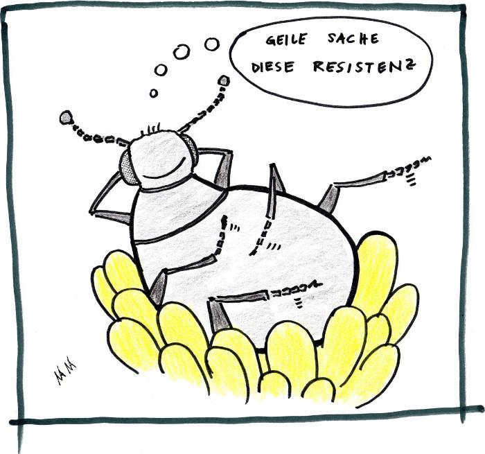 """Der Rapsglanzkäfer wird immer robuster und resistenter gegen herkömmliche Pestizide. Mittlerweile helfen """"normale"""" Produkte kaum mehr. Deshalb greifen Bauern zum Wirkstoff Chlorpyrifos. Sehr zum Nachteil von Mensch und Umwelt."""