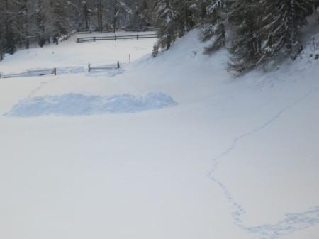 Schneeräumung für illegale Mistlagerung. Hier wird jeweils monatelang Mist auf der Erde gelagert. Copyright Céline