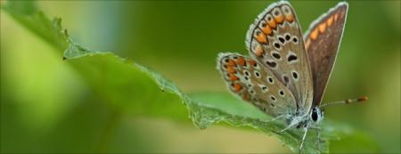 Vielfalt statt Einfalt. Delinat verbindet landwirtschaftliche Produktion mit Biodiversität. Copyright: Delinat.