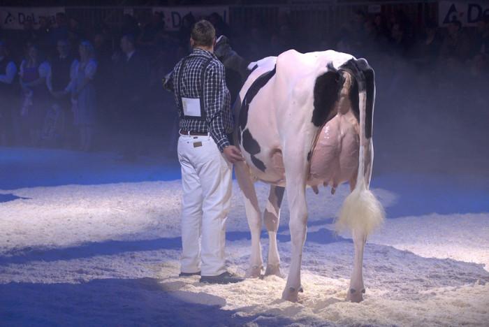 Kein Kommentar nötig! Copyright: Schweizer Tierschutz STS