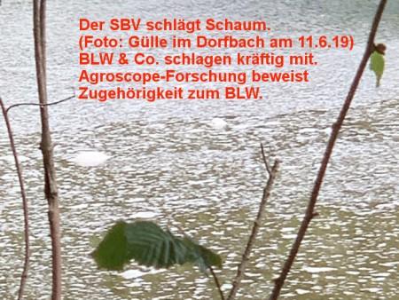 """Mehr zu """"Gülle im Dorfbach"""" folgt demnächst. Copyright: Leserfoto Heidis Mist. Legende: SBV = Schweizer Bauernverband, BLW = Bundesamt für Landwirtschaft"""