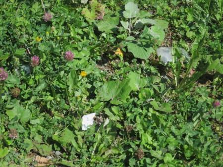Aussichtspunkt auf einer Alp: Auf einem Bänkli sitzend schaute Heidi den Schmetterlingen zu, lauscht dem Rauschen des Baches ... und sah mehrere Lebensmittelverpackungsteile. Auf diesem Foto sind drei zu sehen. Wer findet Sie? Eigentlich nicht der Rede wert, verglichen mit belebteren Orten, aber trotzdem ärgerlich! Littering ist nur in einzelnen Kantonen und Gemeinden strafbar.