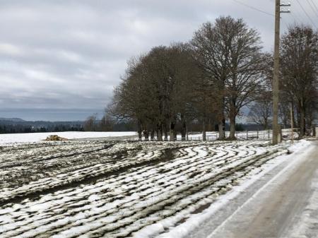 Am Donnerstag, 21.11.19, war schon eine grosse Fläche gegüllt, als wir hier vorbeikamen. Der Bauer war wieder am