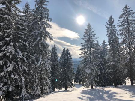Am Montag, 18.11.19 wanderten wir durch diese wunderbare Schneelandschaft. Copyright: Julian P.