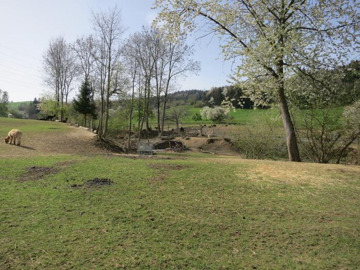 Das obige Foto ist ein Ausschnitt aus diesem Foto, welches vom Zaun aus aufgenommen wurde. Heidi hat das Grundstück nicht betreten!