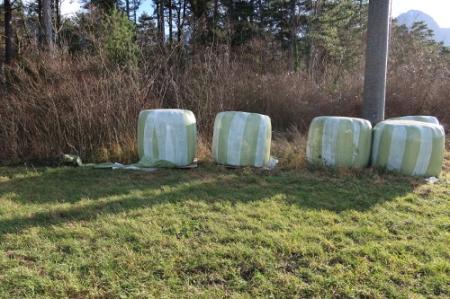 5 Siloballen auf einem Pufferstreifen am Waldrand im St. Galler Rheintal. Welcher Kontrolleur möchte sich deswegen mit dem Bauern überwerfen und die illegale Lagerung anzeigen? Sind ja nur ein paar Siloballen! Foto vom 19.12.19.