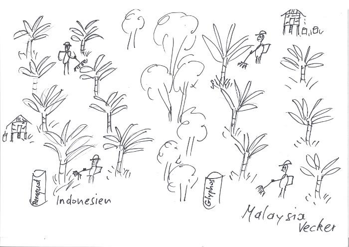 In Malaysia ist Paraquat seit 1.1.20 verboten, in Indonesien wird es weiterhin nicht nur in Palmölplantagen angewendet, sondern auch direkt rund um Häuser, Quellen, Spielplätzen gespritzt. Ein Grossteil der Bevölkerung sieht die rasche Wirkung, kennt aber nicht die Gefahren. So steht es etwa in Regalen von Dorfläden direkt neben Lebensmitteln.