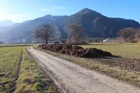 Mist in der Rohan-Schanze, Gemeinde Malans bei Landquart im Kanton Graubünden. Foto 15.1.20.
