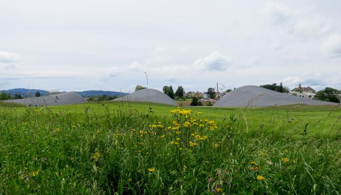 Im Hintergrund: Beta-Glucan-Gerste Ende Mai 2016 im FRUCHTLAND des Zentrums Paul Klee.