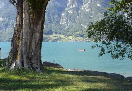 Blick vom linken Seeufer aus auf den Walensee und die steilen Felswände.