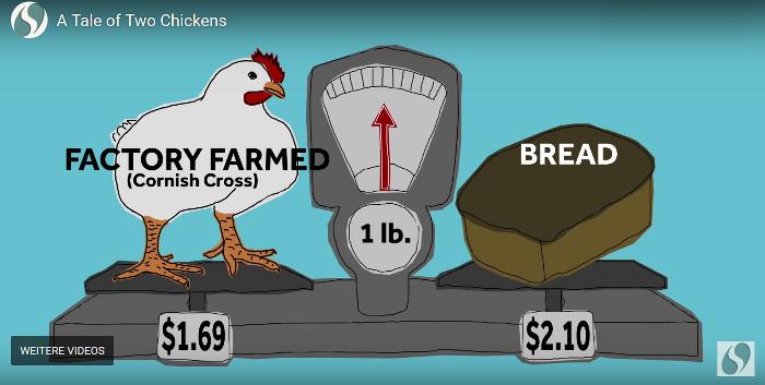 """Mit einem Klick zum Video """"A tale of two chickens"""" gelangen! Copyright: Sustainable Food Trust."""