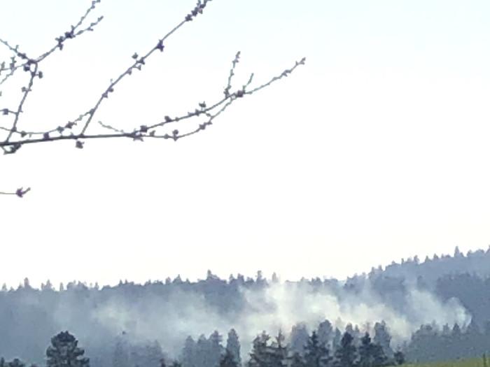 Trotzgrosser Waldbrandgefahr und Feuerverbot brennt es heute, 15.4.20, wieder im Berner Jura. Copyright: Hans T.