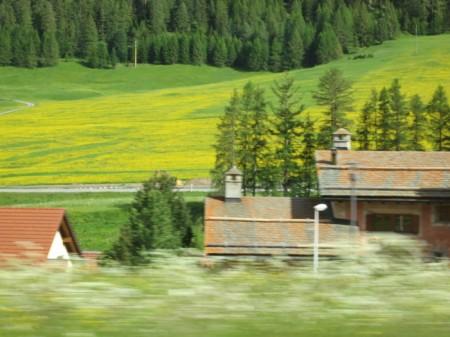 Löwenzahnwiese im Oberengadin, vom Zug aus aufgenommen. Copyright Laura E.