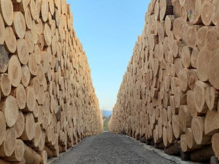 18 Monate lang lagern und trocknen die Baumstämme vor der Verarbeitung. Nur Holz der höchsten Qualitätsklasse wird zu Holzwolle verarbeitet. Dies ist ein Teil der konsequenten Qualitätsstrategie.