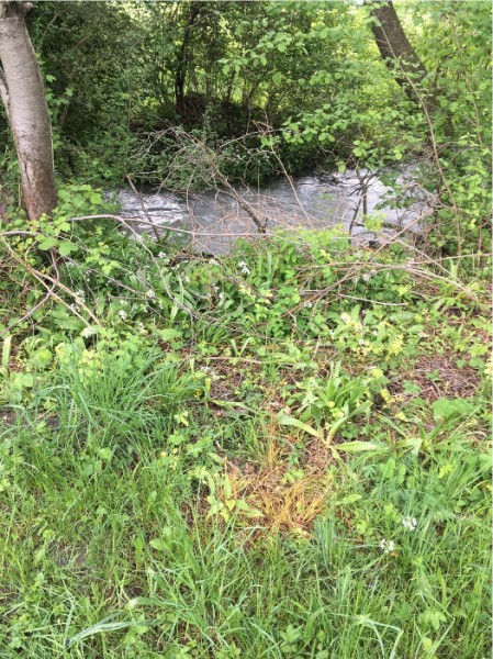 Das Herbizid wurde zu nahe an den Bach gespritzt.