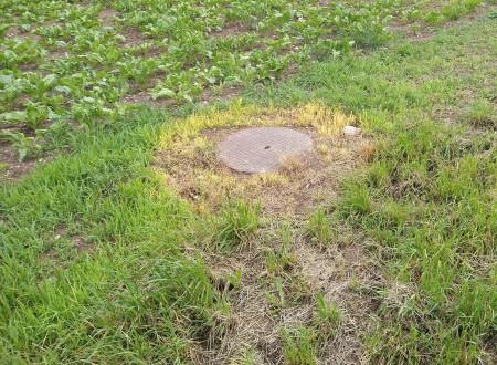 """""""Ein seltsames beunruhigendes Herbizid-Bild an einem Zuckerrübenfeld ... was war da wohl die Idee?"""" Copyright: Jonas T."""