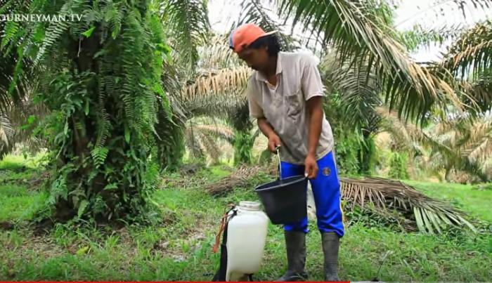 """Einsatz von Paraquat, einem sehr giftigen bei uns verbotenen Herbizid, ohne Schutzkleidung, ohne Handschuhe ... Bild aus dem Film <a href=""""https://www.youtube.com/watch?v=qO9EqtOc6Zg&amp;feature=youtu.be"""" target=""""_blank"""" rel=""""noopener"""">The Devastating Effects Of The World's Palm Oil Addiction</a>. Copyright: Journeyman Pictures."""