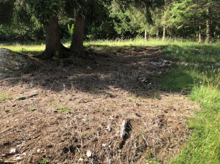 Herbizid gegen Brombeeren auf Wytweide im Jura. Gespritzt wurde im letzten Herbst. Copyright: T.W.