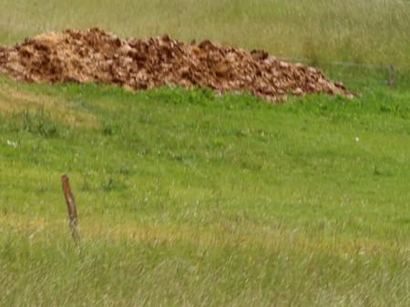 Neu angelegter Misthaufen auf Wiese in Celerina