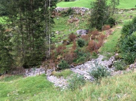 """Hinter den Bäumen ist der Bach an welchem der Pufferstreifen von 3 m für """"Einzelstockbekämpfung"""" nicht eingehalten wurde. Das Geröll im Vordergrund ist ein im Moment trockener Bach des Kraftwerks Bisisthal."""