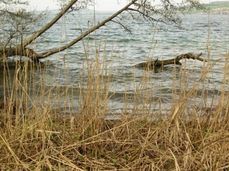 """Bis Ende 2014 kostete die """"Sanierung"""" oder eher Symptombekämpfung der drei Luzerner Seen fast 45 Millionen Franken allein an Bundessteuern, hinzu kommen kantonale Beiträge und lokale Kosten. Auf den ersten Blick sieht der Sempachersee lieblich aus."""